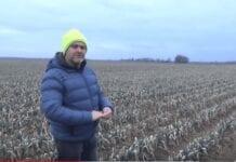 Jaka jest kondycja pora zimującego w gruncie? [VIDEO]