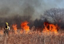 Wypalanie traw grozi nie tylko utratą dopłat!