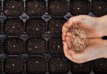 Sposoby na zaprawianie nasion przed siewem