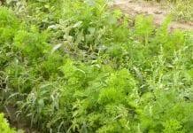 """Uzupełnienia do """"Programu Ochrony Roślin Warzywnych"""""""