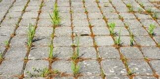 Alternatywa dla glifosatu – bezpieczne środki na chwasty istnieją