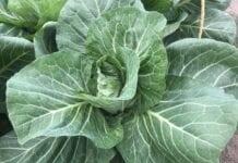 Mikroorganizmy w uprawie warzyw [VIDEO]