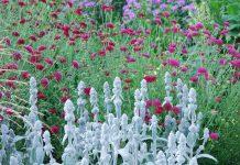 Zapraszamy na webinarium – byliny na suche i słoneczne stanowiska