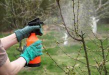 Lepiej zapobiegać niż leczyć – chroń swoje rośliny przed chorobami grzybowymi