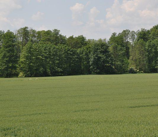 Polski Ład dla rolnictwa i rozwoju obszarów wiejskich