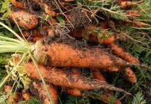 Rynek produktów rolnictwa zrównoważonego będzie wart 64,6 mld zł