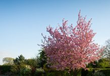 Meble ogrodowe – jak wybrać najlepsze dla siebie?