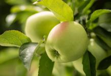Polskie jabłka w międzynarodowej kampanii marketingowej