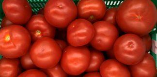 Nowe odmiany pomidora już są!