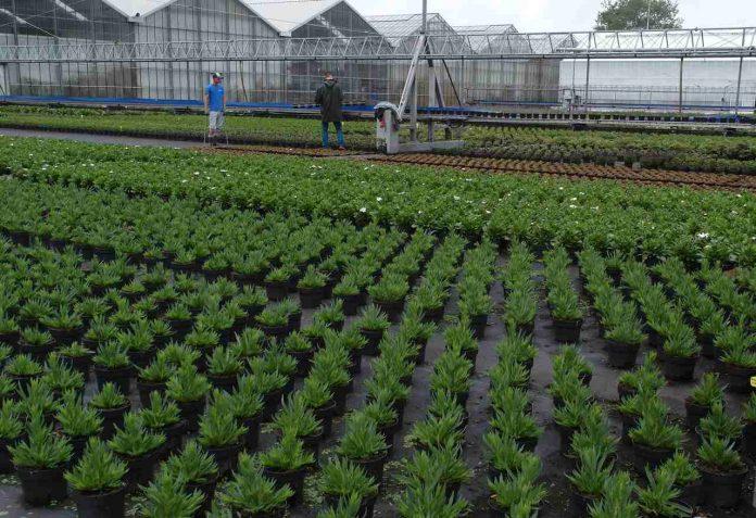 Pracownicy w Holandii fot. I. Sprzączka