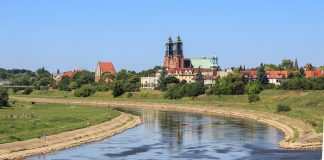 Ogród wertykalny czy horyzontalny – który wybrać, mieszkając w Poznaniu?