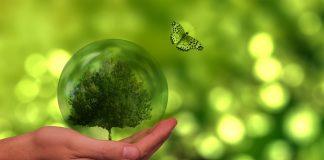 Agroenergia – rozpoczął się nabór wniosków