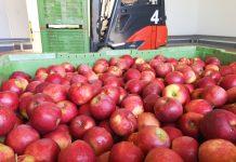 """""""Przechowalnictwo jabłek. Praktyczny przewodnik"""" już dostępny!"""